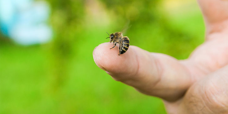 The 6 Best Home Remedies for Bee Stings